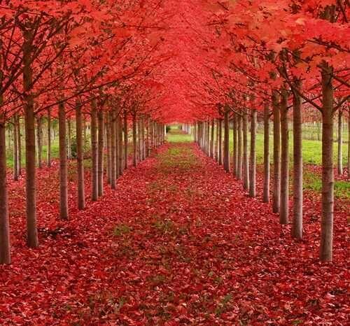世界上最惊艳的15颗树 - 华卉 - 华卉的博客