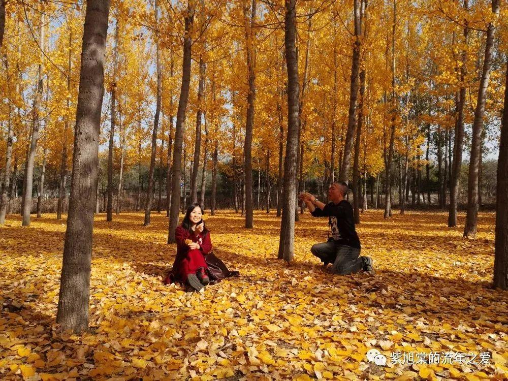 【津城漫游20171107】立冬,艳遇杨树林&渔池扫荡记