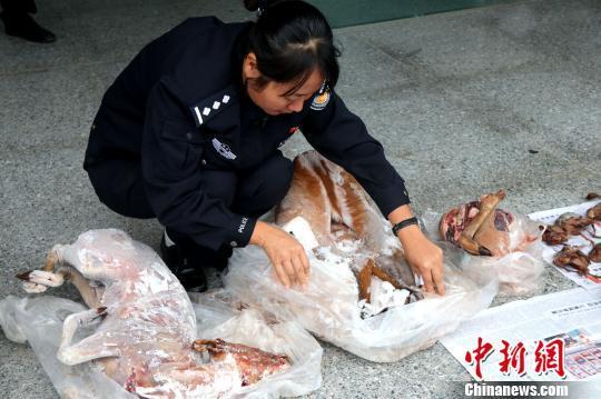 云南省景谷县公开销毁一批野生动物死体
