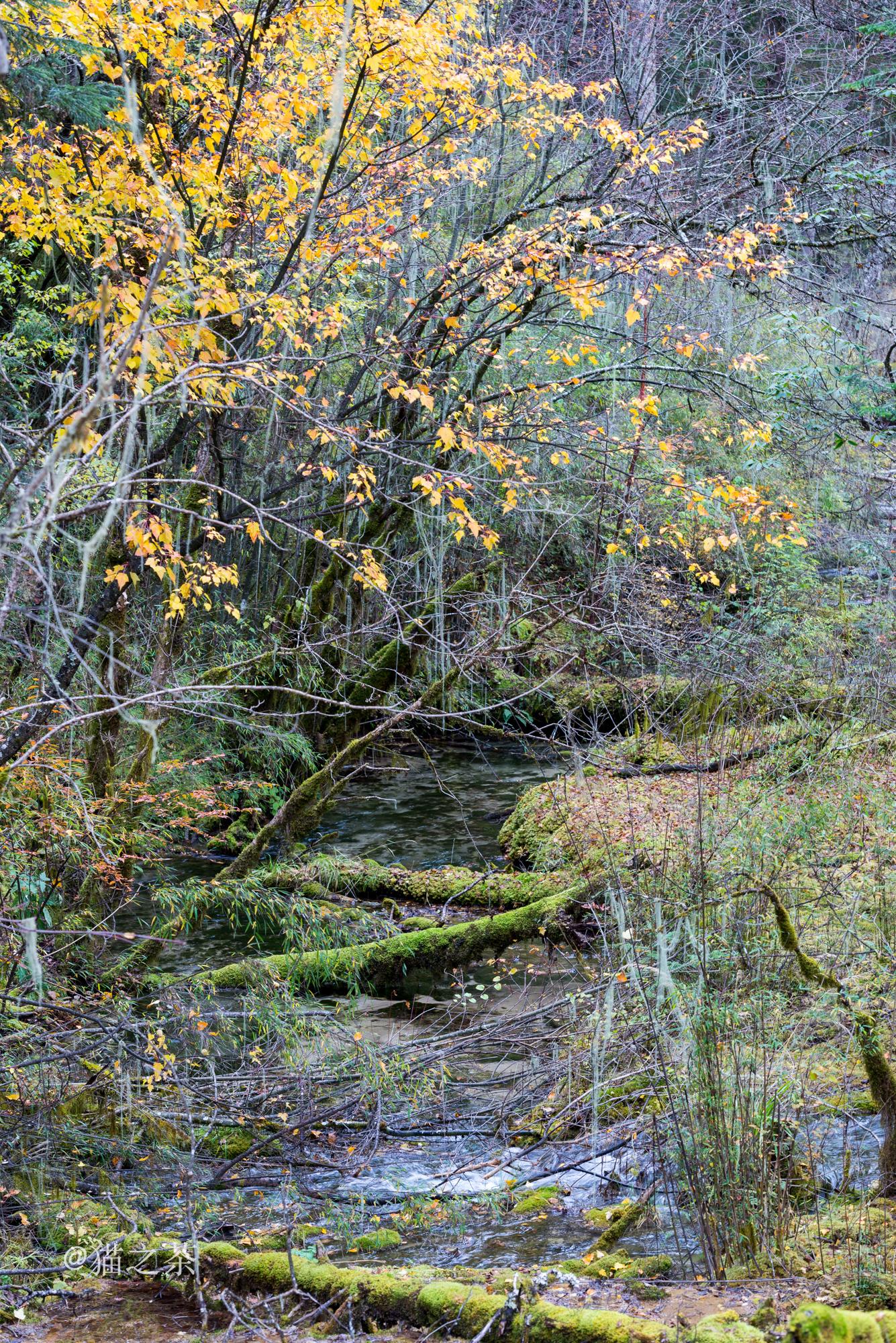 卡龙沟六十里彩林,尽头却是纯正森女范