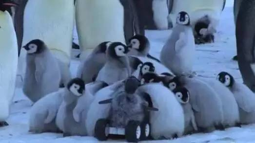 BBC的偷拍神招,感觉动物们再也不会相信人类了