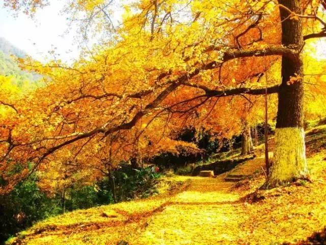 距2018还有不到50天!南国却刚刚进入最美的秋天…