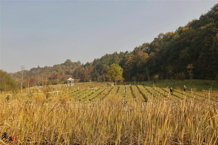 离武汉50余公里的这个景区,金色秋叶成美女的拍照利器,张张是美图