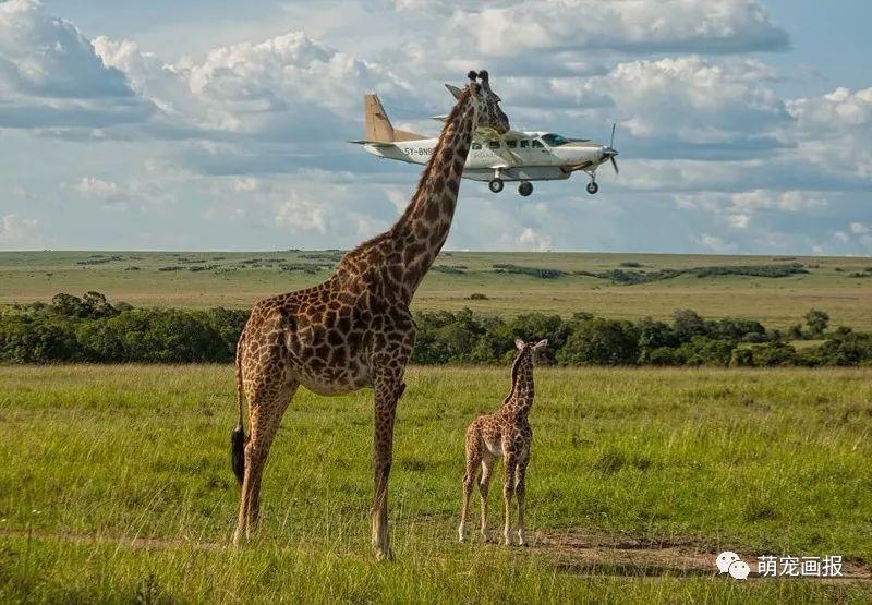 野生动物奇趣摄影,抓拍的瞬间实在是太可乐了!