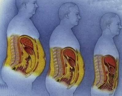 人体脂肪_保护,稳定我们的器官 也是人体能量储备的最后保障 但是如果内脏脂肪