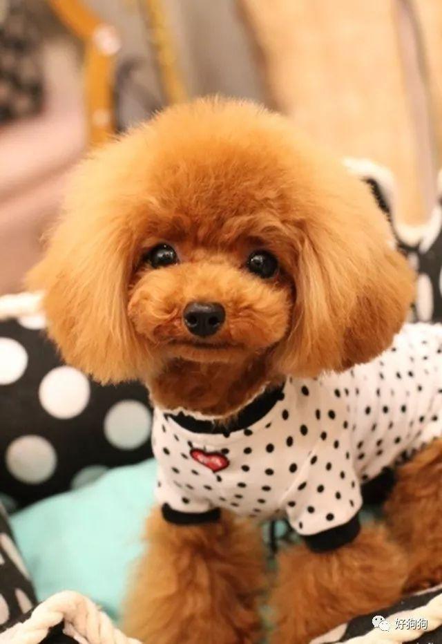 宠物 正文  狗子颜值高不高,三分天注定,七分靠发型,最典型的要数泰迪