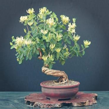 花卉市场被人挤爆 原来他是被今年流行的树桩盆景吸引了