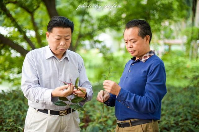 走进中国南方药都,感受传统中医药智慧的博大精深