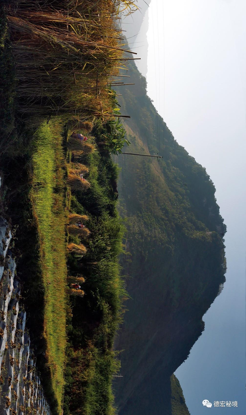 金秋十月,十里稻香,这些农村收稻谷的场景你还记... _网易新闻
