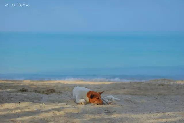 悠然寇立,淳朴甲米,泰国游就是要泡在酒店!