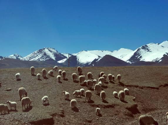 去西藏,洗澡可能洗出大问题
