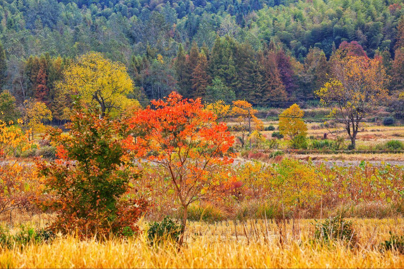 最美的秋天竟然藏在徽州的这个古村落中,你去过吗?