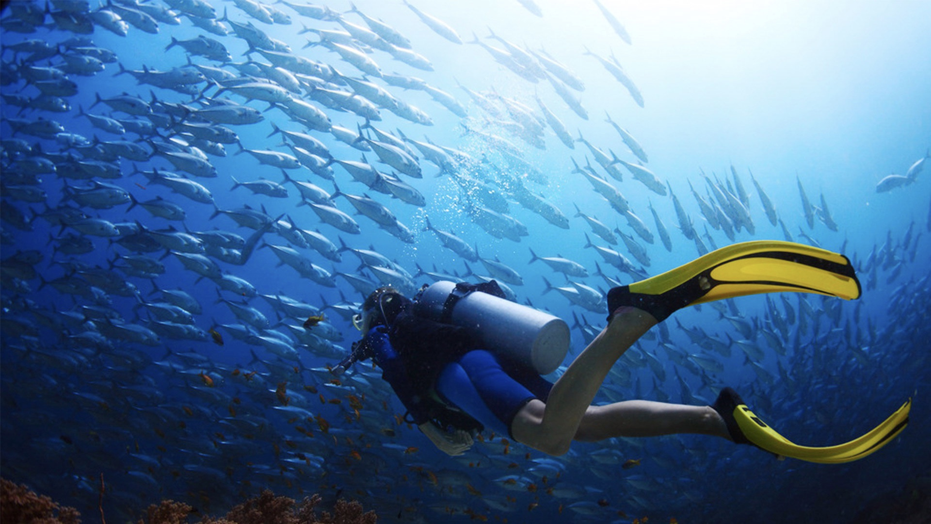 中国游客在泰国潜水发生意外,那么如何在意外发生时冷静自救呢?
