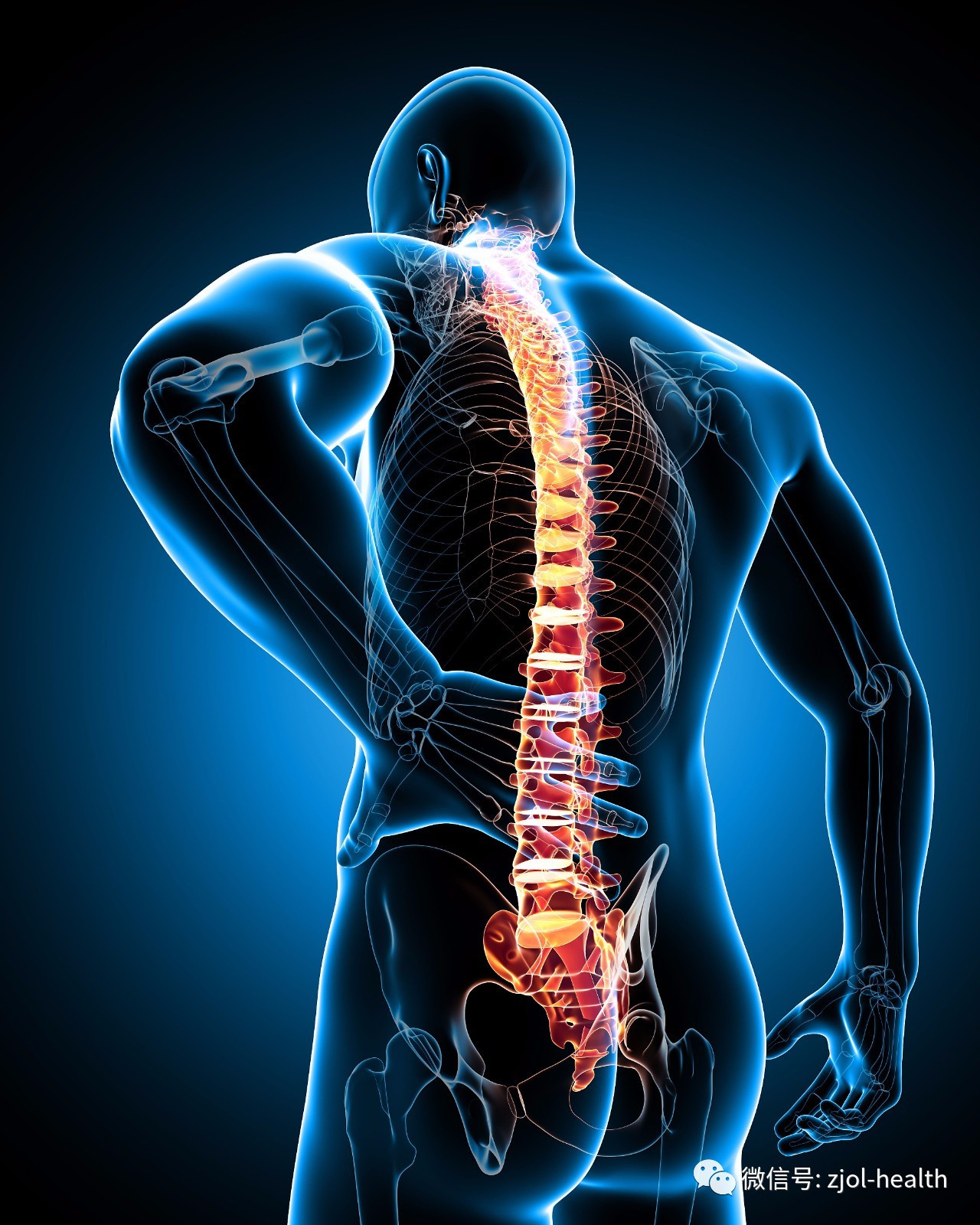 腰椎间盘突出位置图