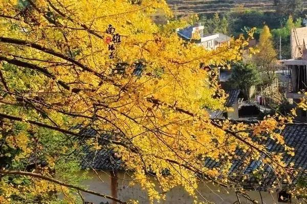 谁说的广东没有秋天?那是因为你不知道这些地方!美的不可思议……