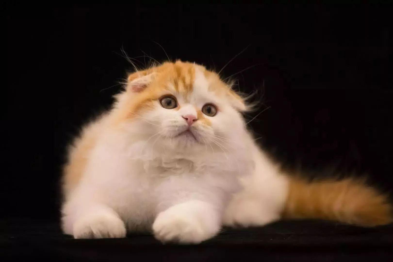 壁纸 动物 猫 猫咪 小猫 桌面 1620_1080