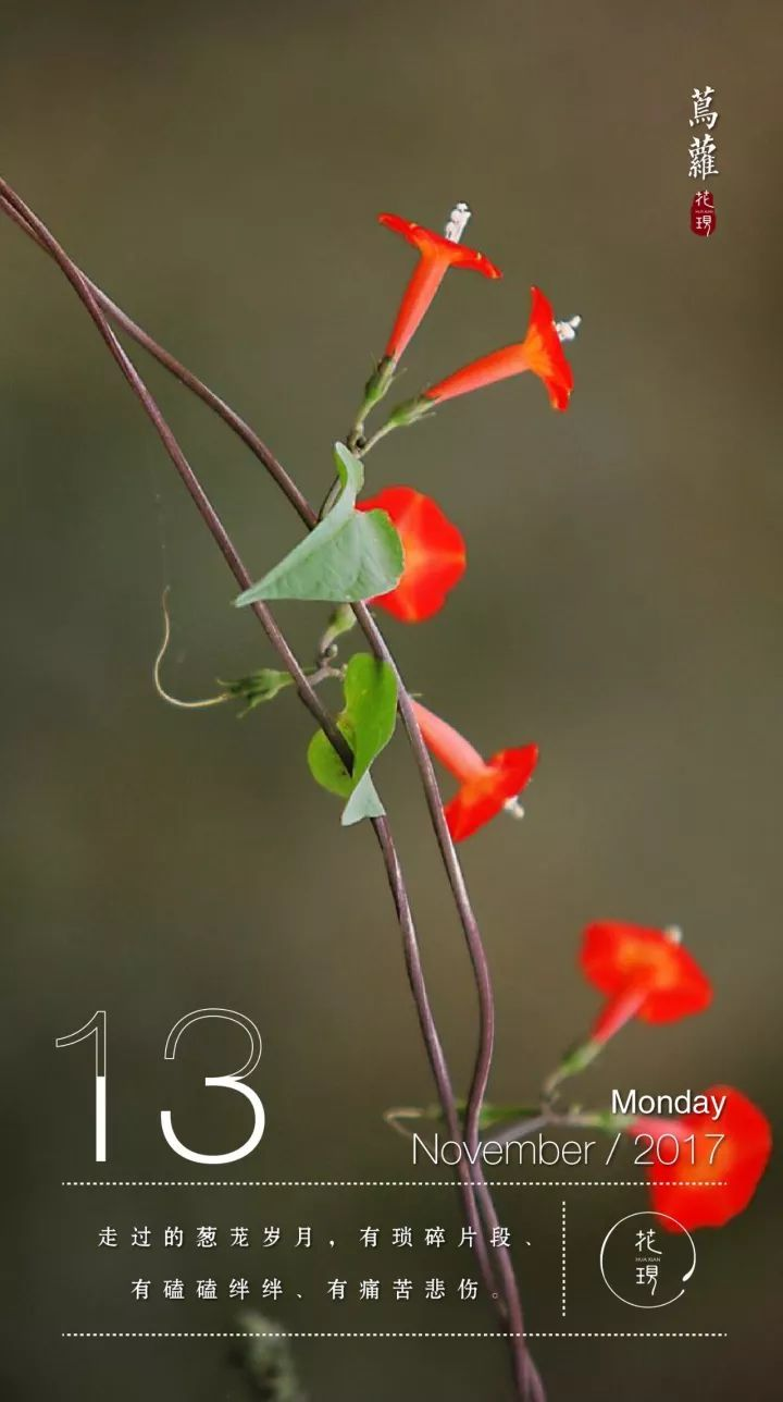 别名:茑萝松,五角星花,羽叶茑萝,锦屏封,金丝线,绕龙花 花语:尊崇图片