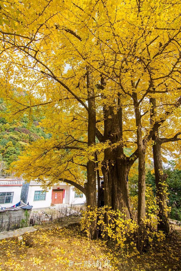 洛阳最黄的2条村落,隐藏在白云山的崇山峻岭中,美色引朋友圈赞叹