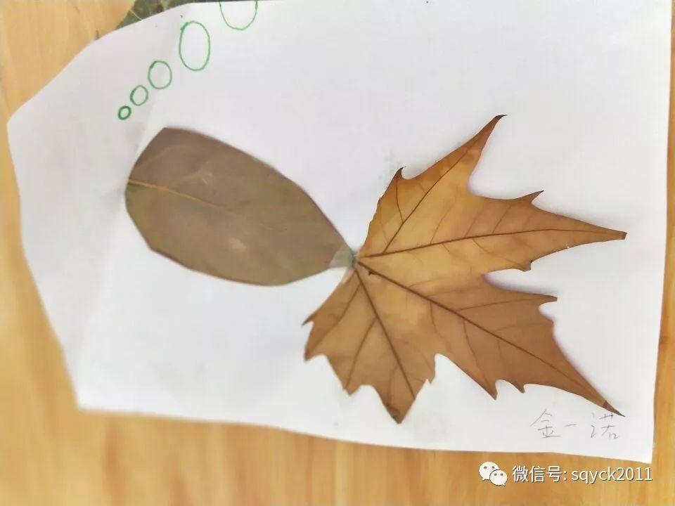 """【园内动态】中班主题活动""""拜访大树""""图片"""