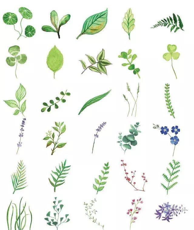 正文  此次 北京坊ccpa公共艺术工作坊,我们有幸邀请到了植物科学绘画