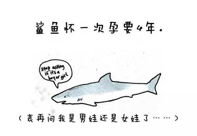 原来,鲨鱼一次怀孕需要4年,而猪是看不到天空的!