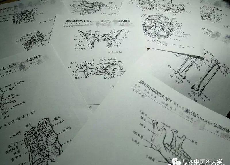 医学人体解剖手绘:科学与艺术的交织