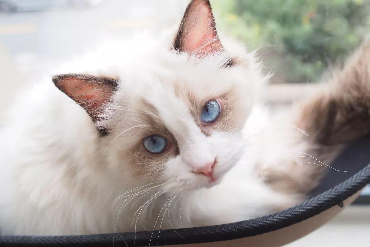 猫说少女衣橱