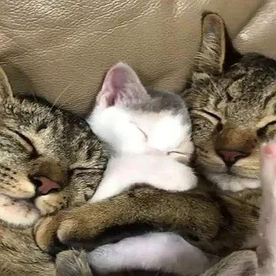 说过多少次了,囤积猫咪绝不是爱猫!