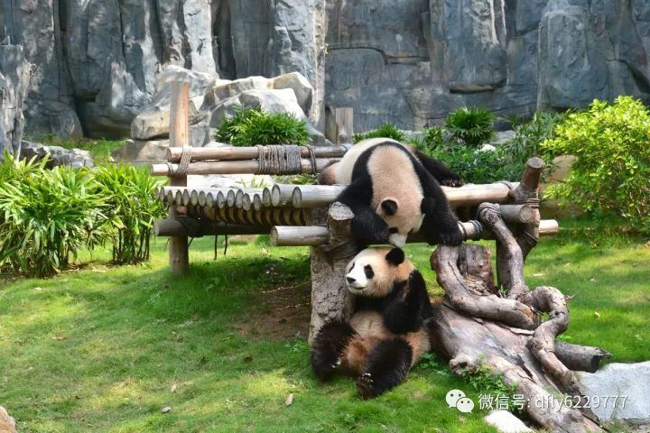 娱乐 正文  ,游览熊猫馆,珍稀鸟街,猛兽谷,杂食动物馆,下午14:00分可