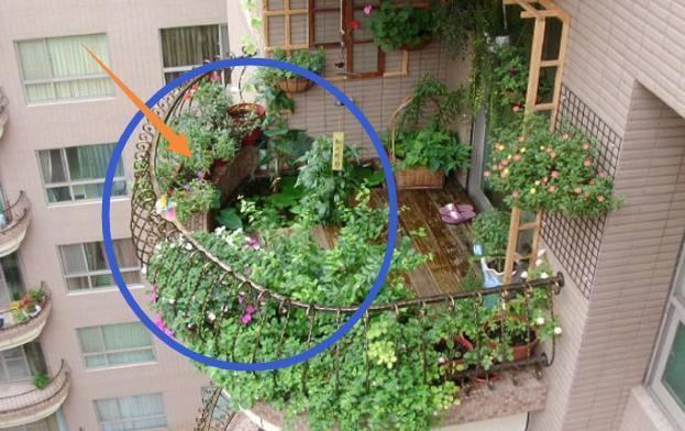 盆景 盆栽 平面图 植物 623_392