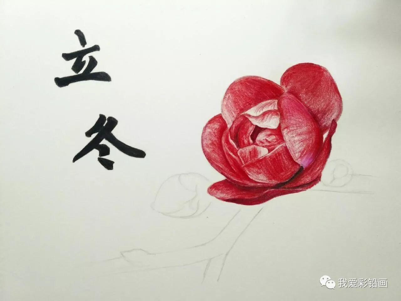 梅花一枝(彩铅手绘过程)