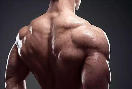 训练计划, 背部, 肱二头肌, 增肌