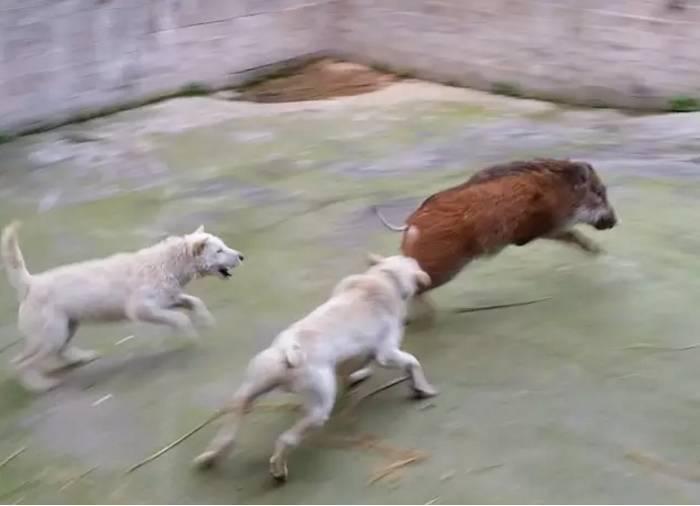 壁纸兵器狗狗狗700_506剑三v壁纸动物具体步骤图片