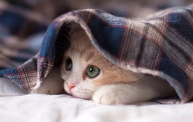 猫奴们的日常,少年,撸猫?可以什么证文凭高中考图片
