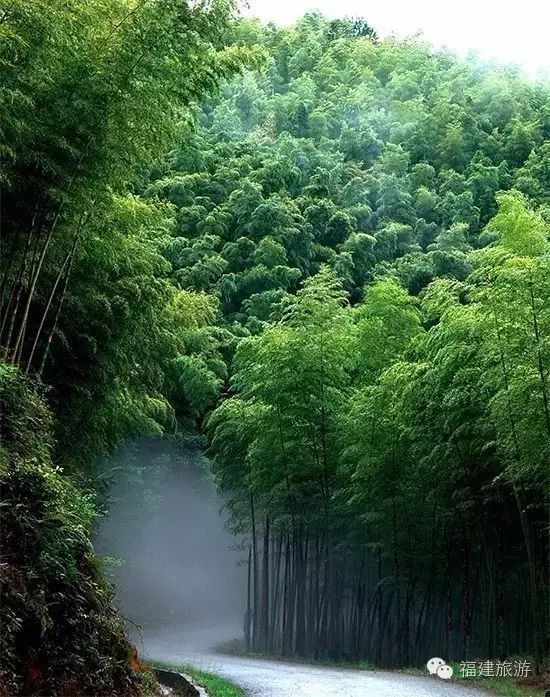 竹产业成为全球公认的绿色产业 (图1)