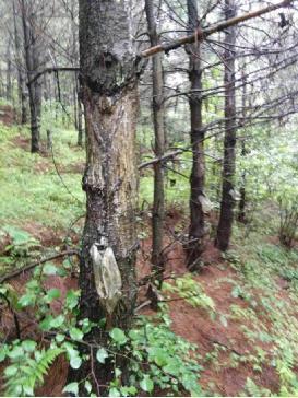 水城县木果乡牛场村干部私分山林和补助款被举报