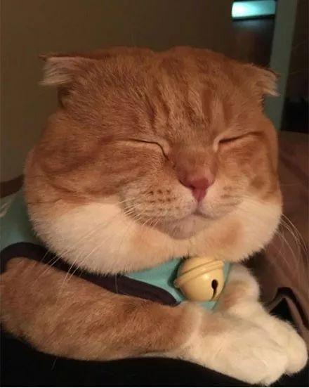 壁纸 动物 猫 猫咪 小猫 桌面 440_552 竖版 竖屏 手机
