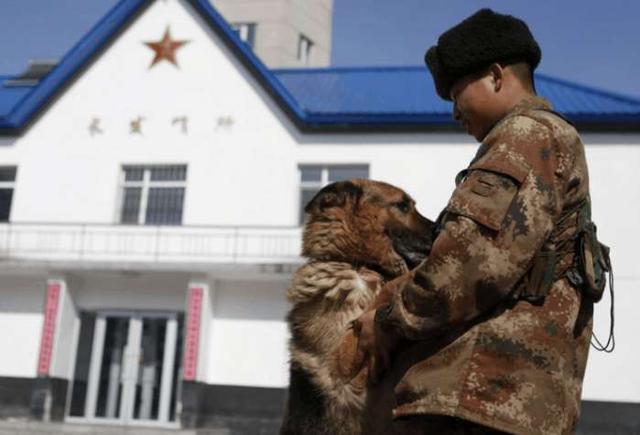 军犬哭囹�a��(�-c_当训练员要退役的时候,军犬哭的像个孩子一样!