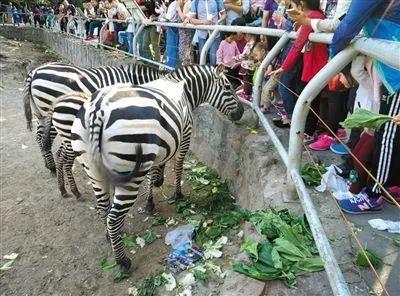 北京大兴动物园黑熊,遭遇男子两次扔砸胡萝卜!