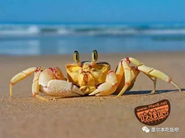 梦到抓螃蟹和鲍鱼