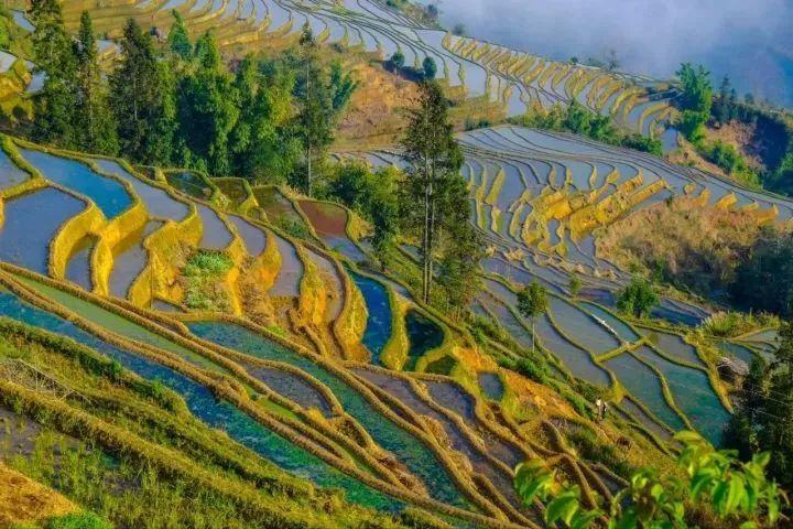 旅游 正文  哈尼族开垦的梯田随山势地形变化,因地制宜, 这一景观是