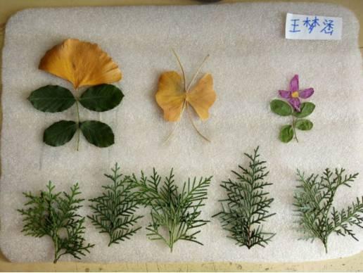 学生创意树叶拼贴画作品展第八篇丨小小手,把树叶,变成画!