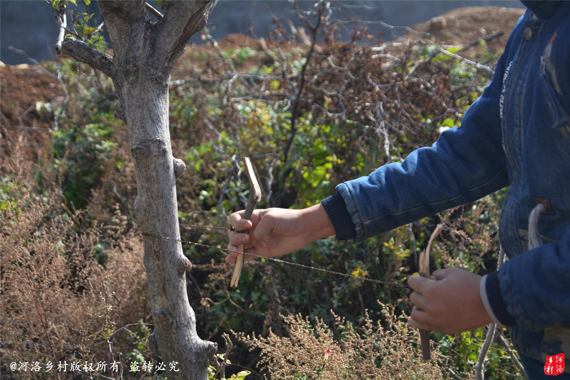农村女人性交视频_农村10岁儿童表演铁丝锯树,受快手视频影响,张口:老铁