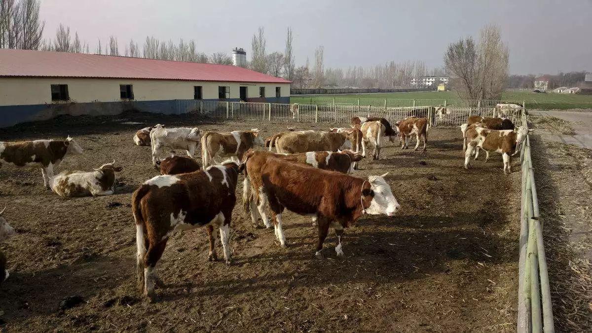 农村养殖业补贴那么多 为何有些地方要
