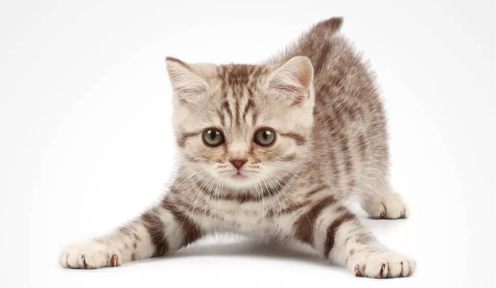最便宜的猫_舟山办毕业证 主页 Home