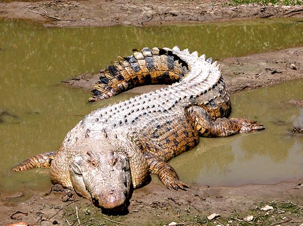 世界最的动物_盘点地球上最丑陋的动物 丑到让人恐惧 图