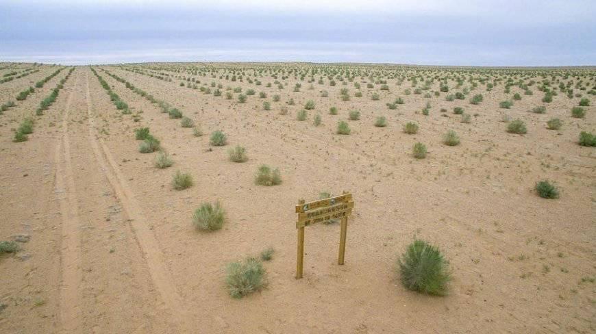 森林尾灯2.3亿人一起种树宝马蚂蚁进苍蝇4s赔吗图片