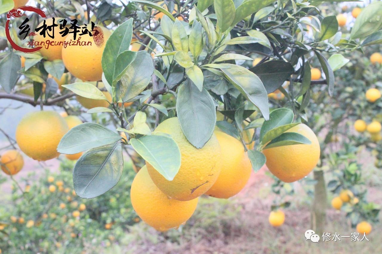 修水这个女孩长期吃橙子爆出惊人秘密..