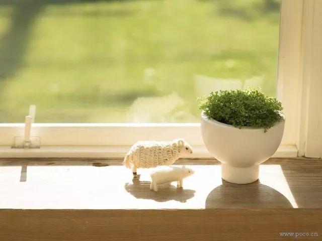 室内植物对丁香身心健康的v植物到底有多大?人体5月深爱婷婷图片