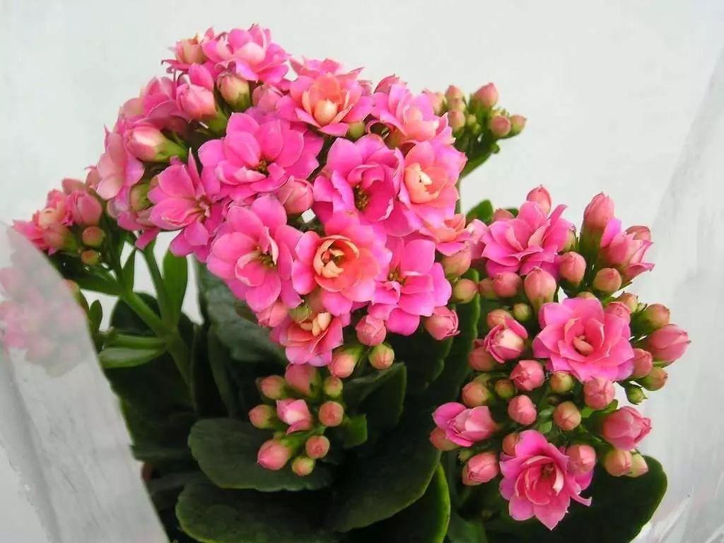 2018年春节适合养的六种花,即吉祥又喜庆